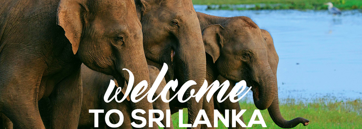 Sri Lanka to welcome tourists from countries which will vaccinate citizens Welcome